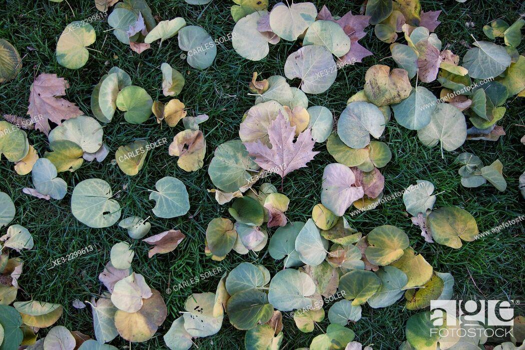 Stock Photo: Spain, Madrid, El Retiro Park, Leaves lying on grass.
