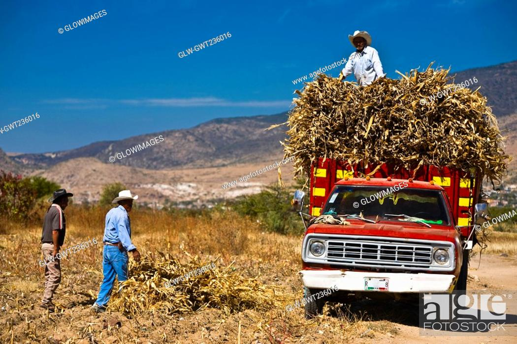 Stock Photo: Three mature men loading crop on a pick-up truck, Oaxaca, Oaxaca State, Mexico.