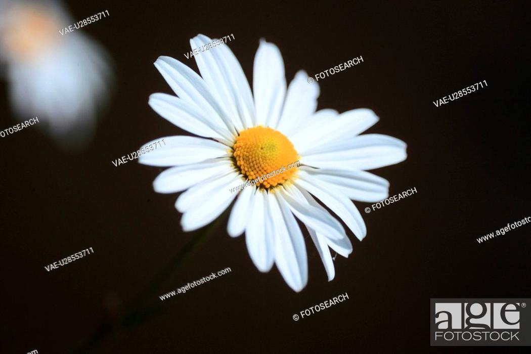 Stock Photo: bloom, plant, flowers, plants, flower, blossom, nature.