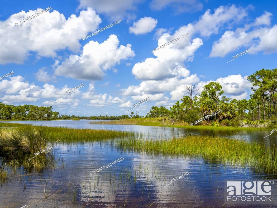 Imagen: Webb Lale in the Fred C. Babcock/Cecil M. Webb Wildlife Management Area in Punta Gorda Florida USA.