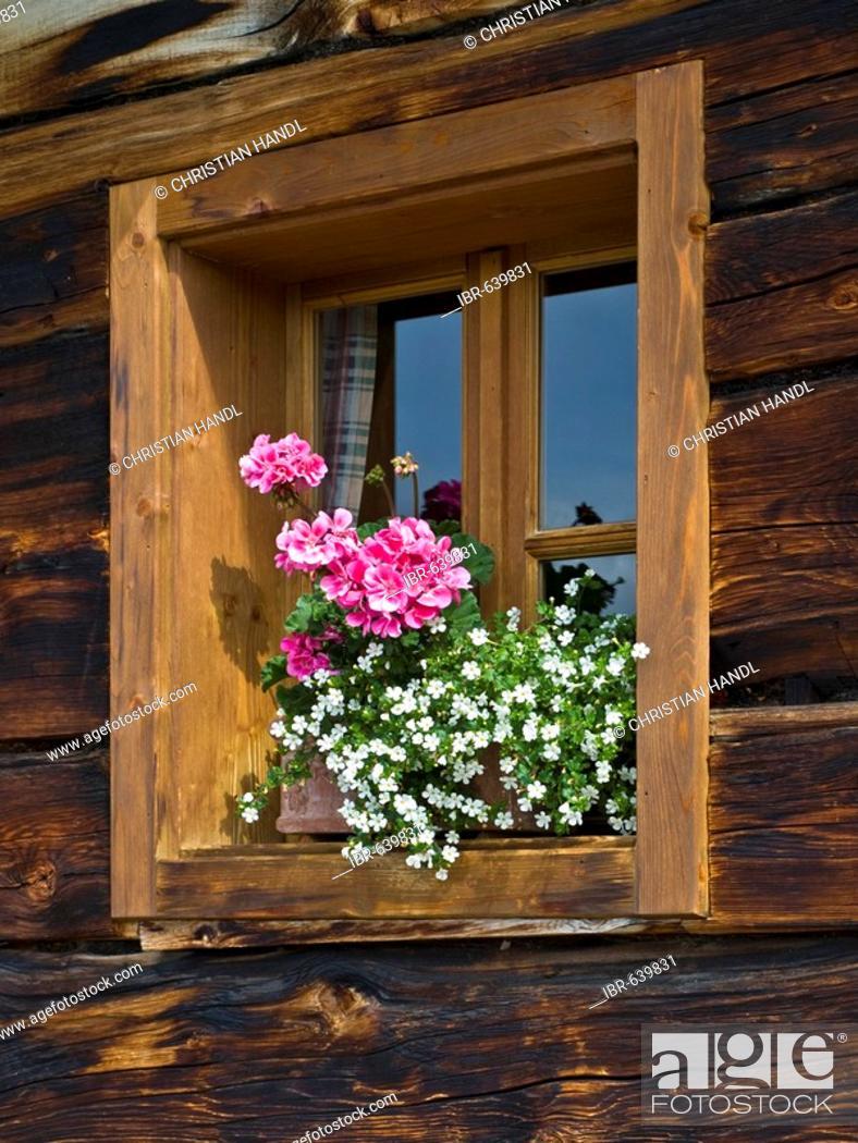 Stock Photo: Flowers in front of a window, Grossellmaualm (Grossellmau mountain pasture), Grossarltal (Grossarl Valley), Salzburg, Austria, Europe.