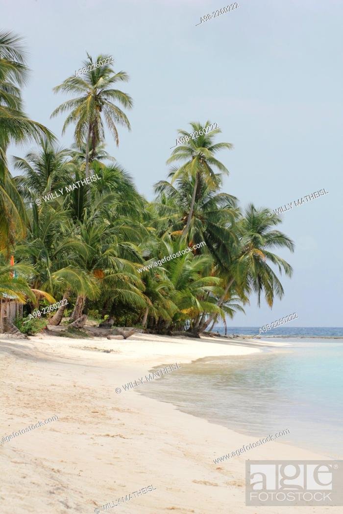 Stock Photo: Seaside palm grove on the sandy beach of San Blas Islands, Panama, Central America.