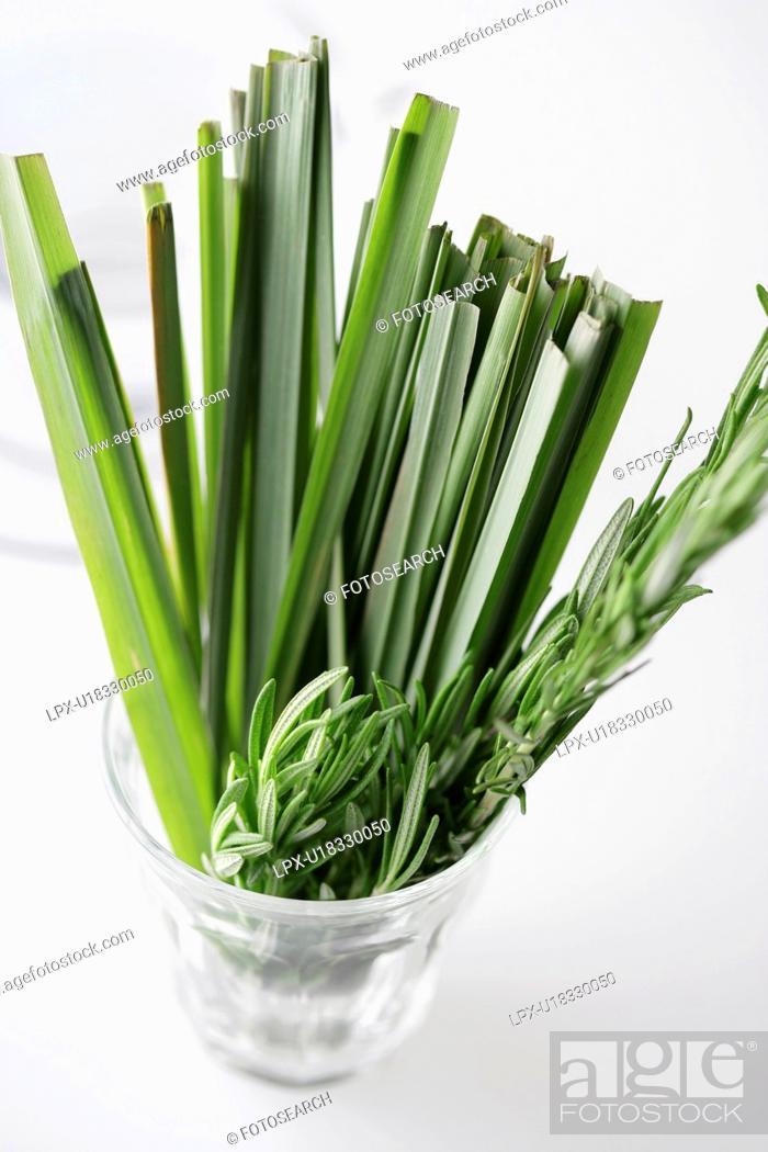 Stock Photo: Lemon grass and rosemary.