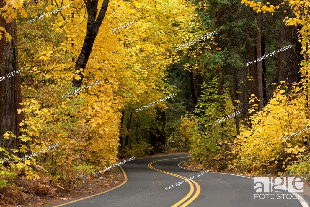Stock Photo: A road through a forest with golden autumn leaves.