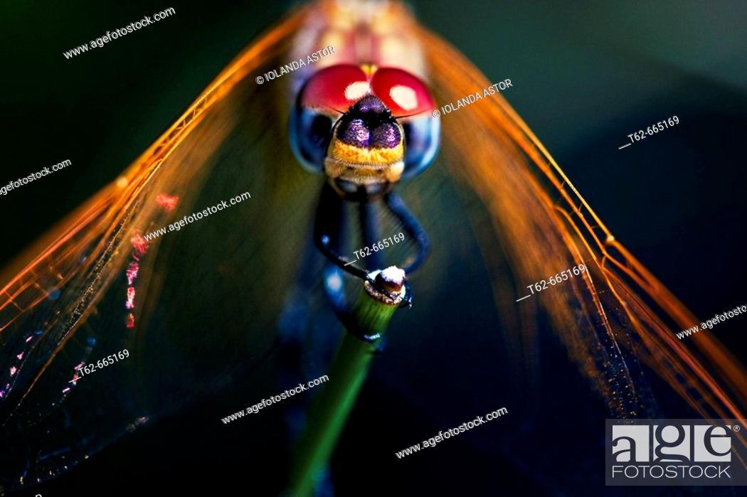 Imagen: Dragonfly.