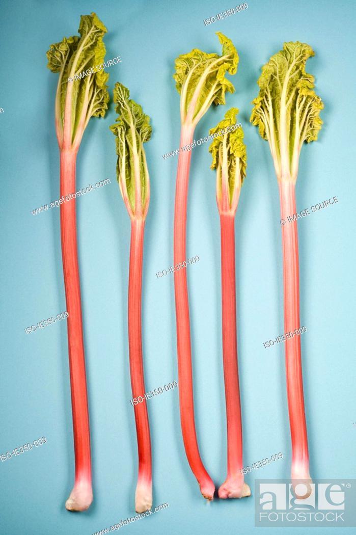 Stock Photo: Rhubarb.