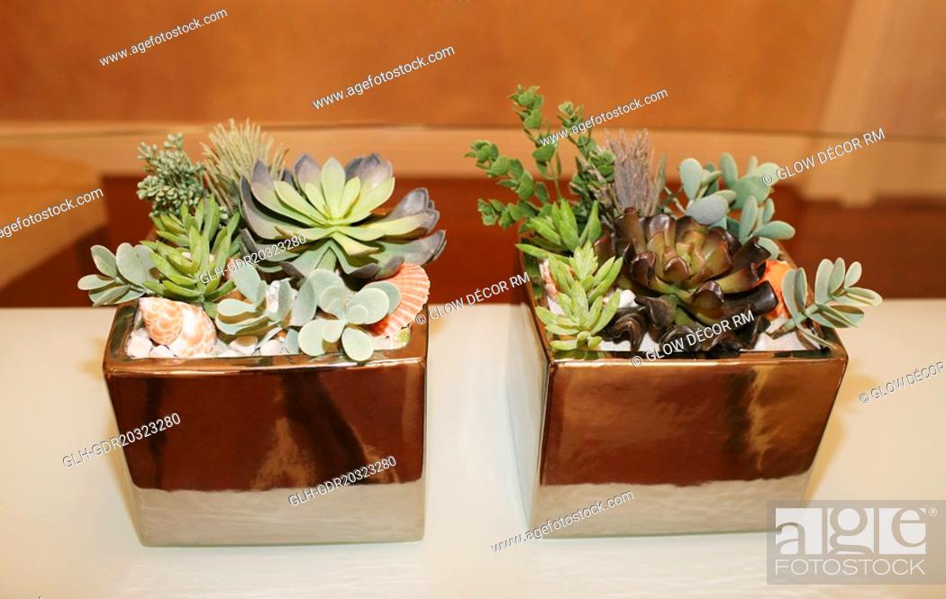 Imagen: Houseplants on a table.