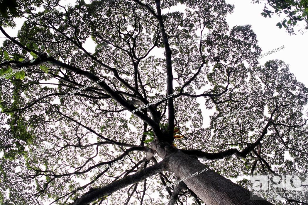 Stock Photo: Sunlight through tree canopy, borneo.
