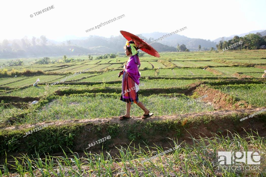 Stock Photo: agriculture in Thailand.