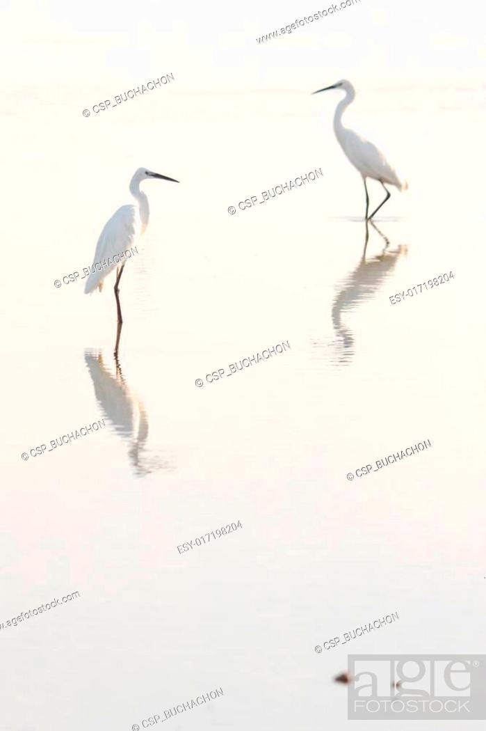Stock Photo: The image of egret and flamingo.