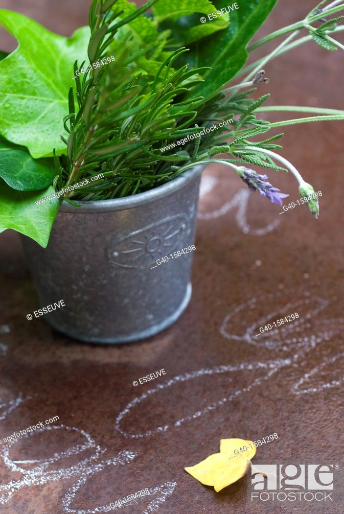 Stock Photo: Aromatic Plants and Ivy.