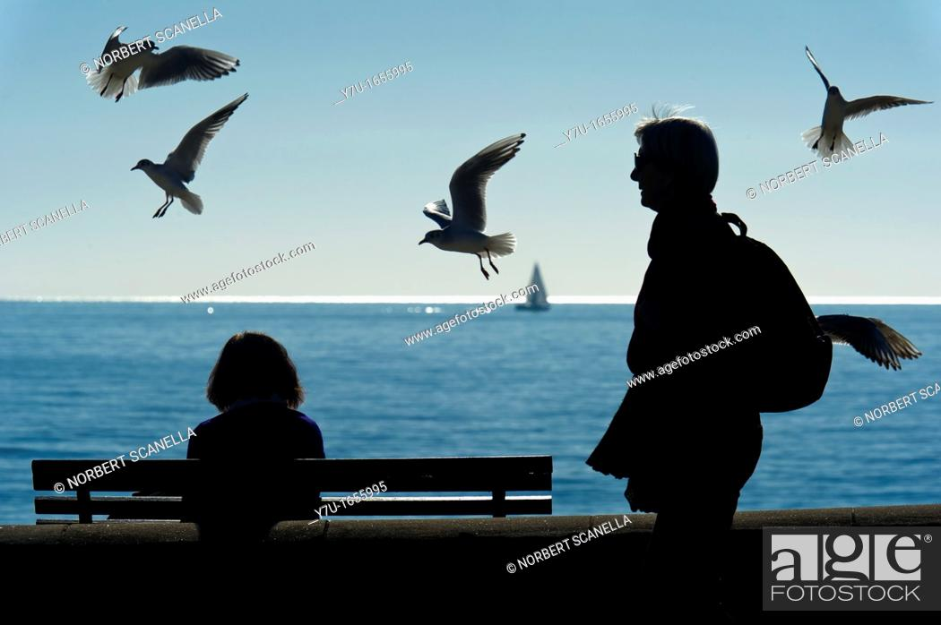 Stock Photo: Europe, France, Alpes-Maritimes, Cannes. Seagulls by the sea.