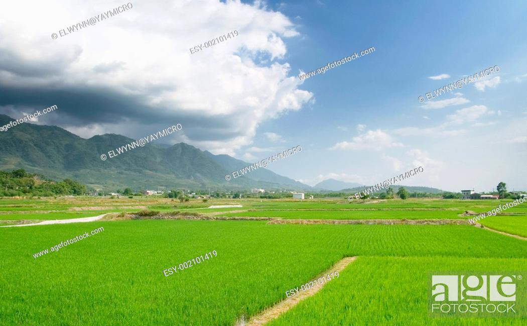 Stock Photo: landscape of beautiful green farm.