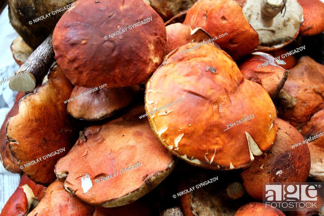 Stock Photo: White mushrooms in the Western Siberia.