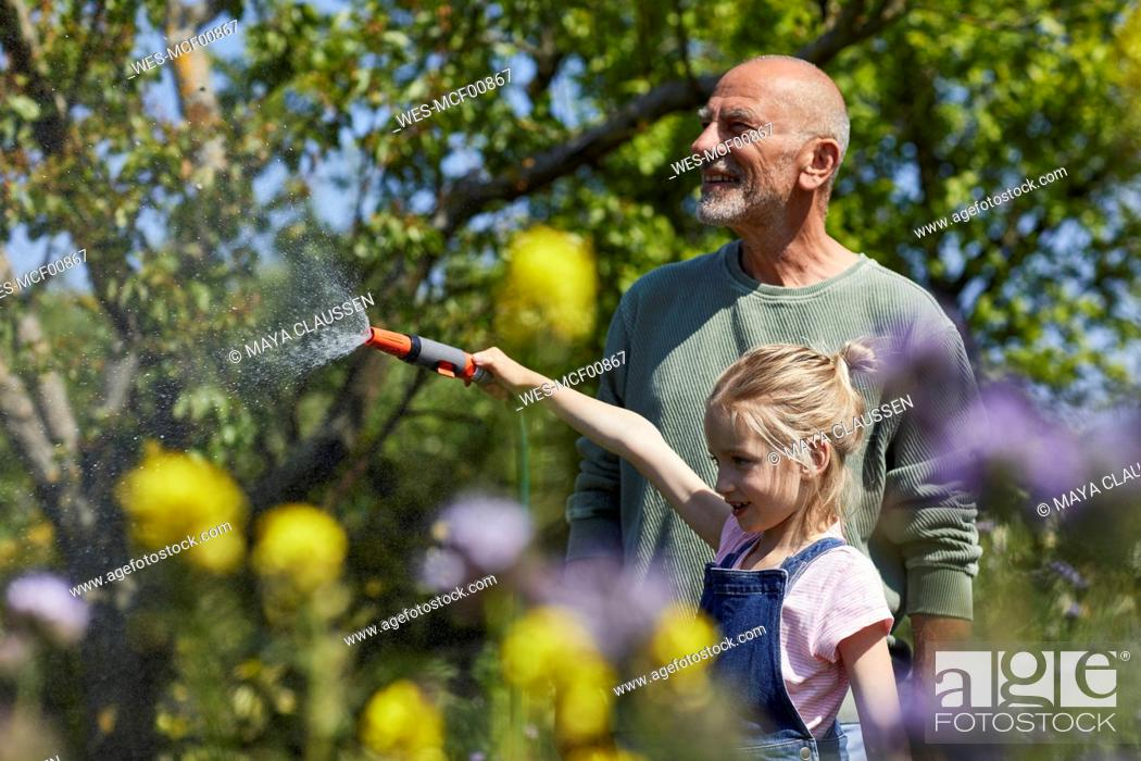 Stock Photo: Grandfather and granddaughter watering flowers in allotment garden.