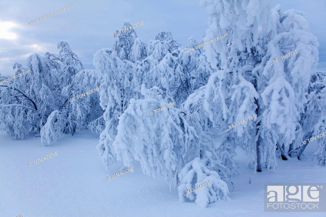 Stock Photo: landscape of Northern Finland.