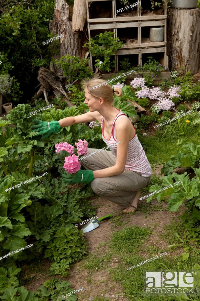 Stock Photo: A woman gardening in her back yard, high angle view.