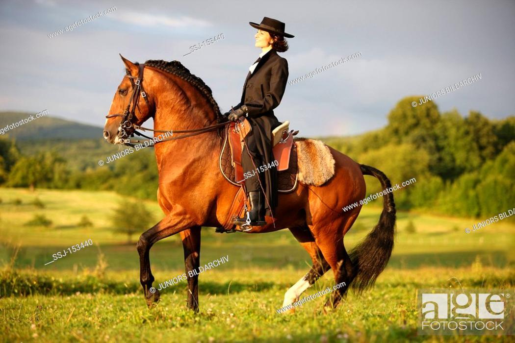 Stock Photo: woman riding on Lusitano horse.