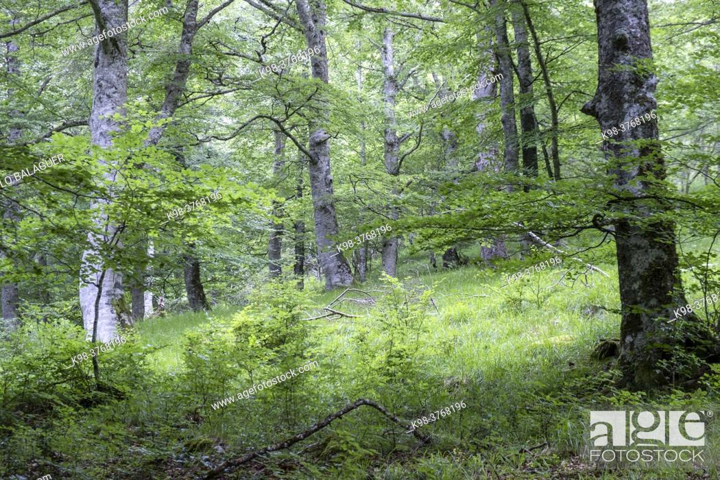 Stock Photo: GR20 long distance trail, Sierra de Aralar, Navarra, spain.