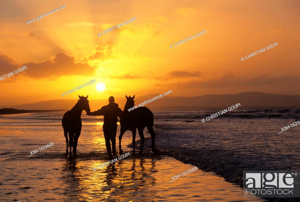 Stock Photo: horses training on the beach of Downhill, County Londonderry, Northern Ireland, United Kingdom, Western Europe.