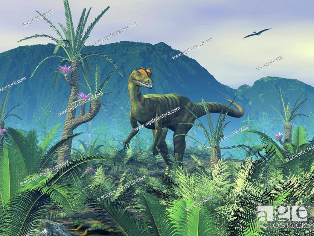 Photo de stock: Dilophosaurus. Computer artwork of an adult male Dilophosaurus dinosaur on a hilltop covered in sago palms, Williamsonia gigas, and ferns.