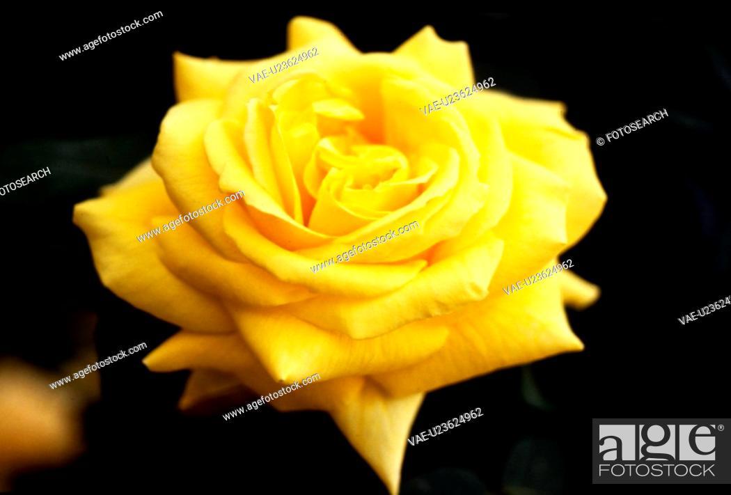 Stock Photo: flowers, nature, flower, yellow flower, scene, wildflower, landscape.