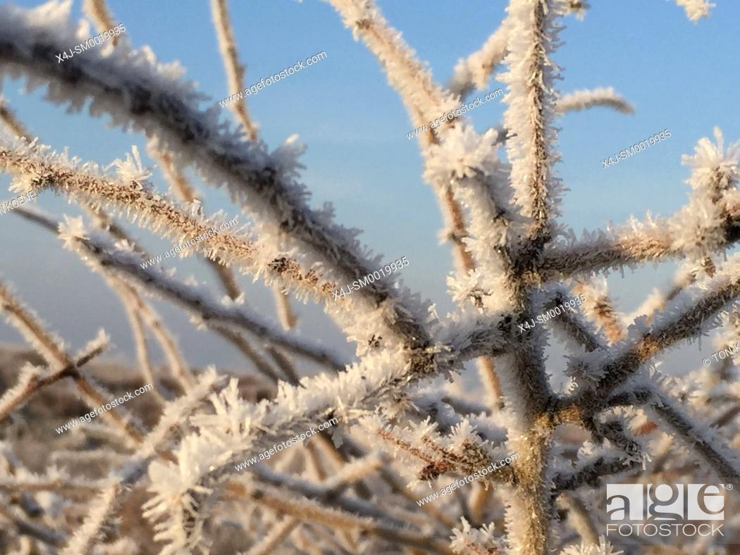 Stock Photo: Winter in Holland.