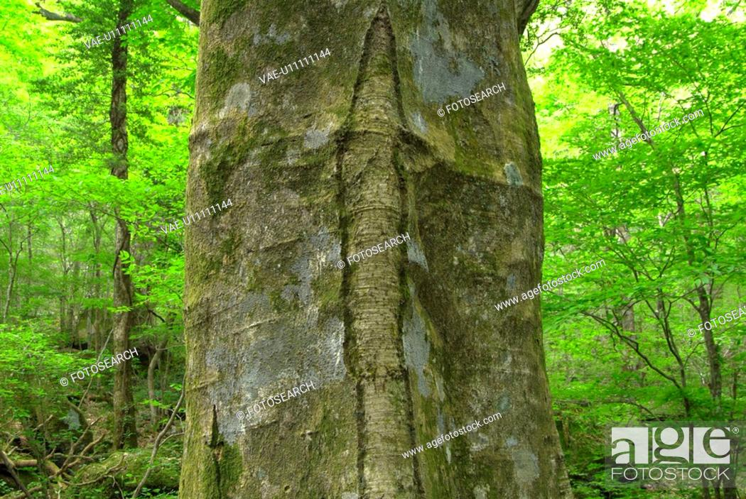 Stock Photo: Big tree.