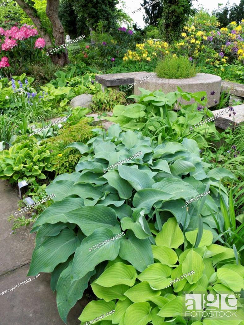 Hostas Plantain Lily Karl Foerster Garten Potsdam Germany Stock