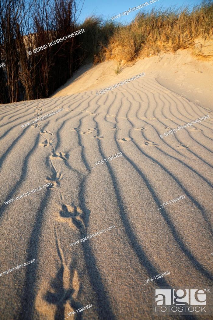Stock Photo: sand dunes with bird tracks, Heligoland, Germany.
