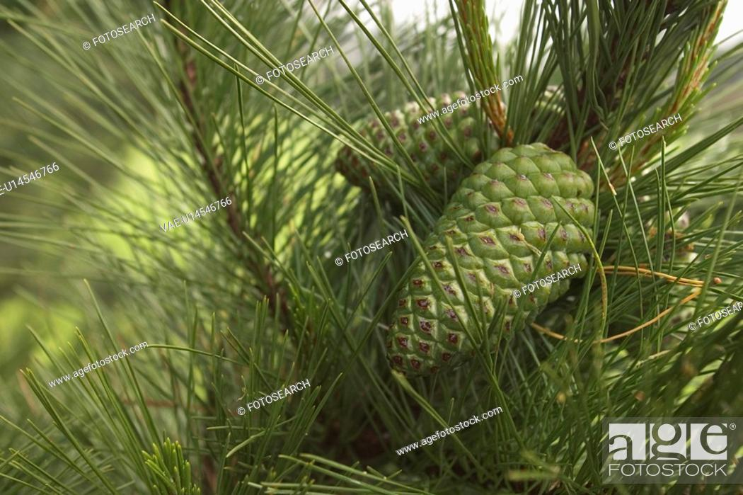 Stock Photo: outdoors, day, daytime, close-up, plant, plant life.