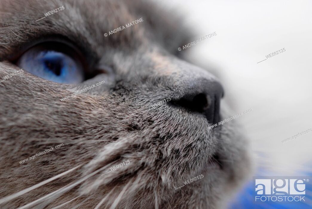 Stock Photo: Cat close up.