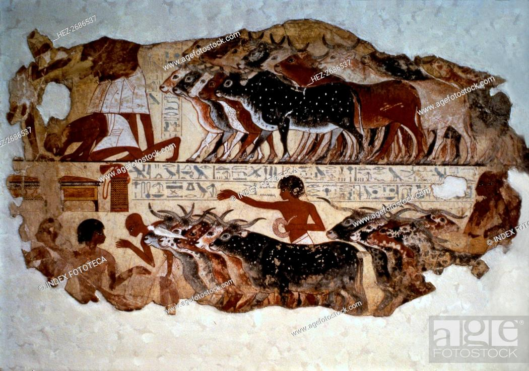 Stock Photo: Inspection of cattle. Fresco from the tomb of Nebamun at Thebes.