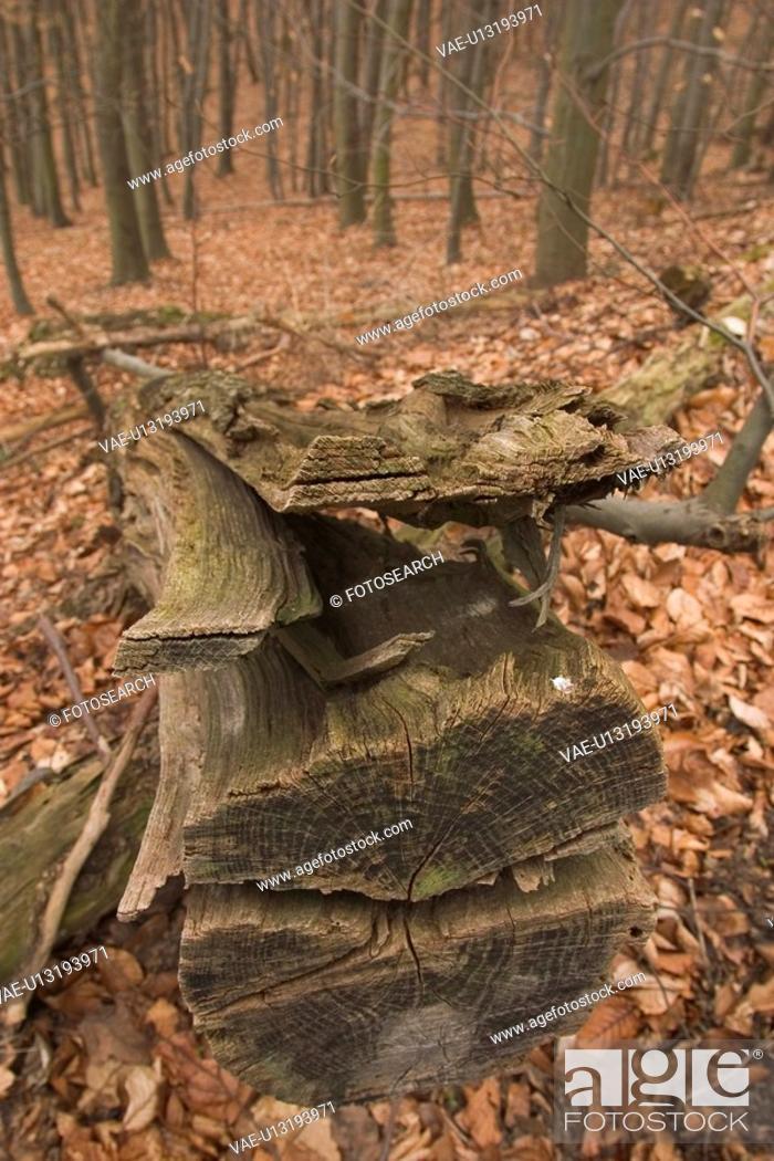 Stock Photo: growth, dense, dense growth, natural, outdoors, plants.
