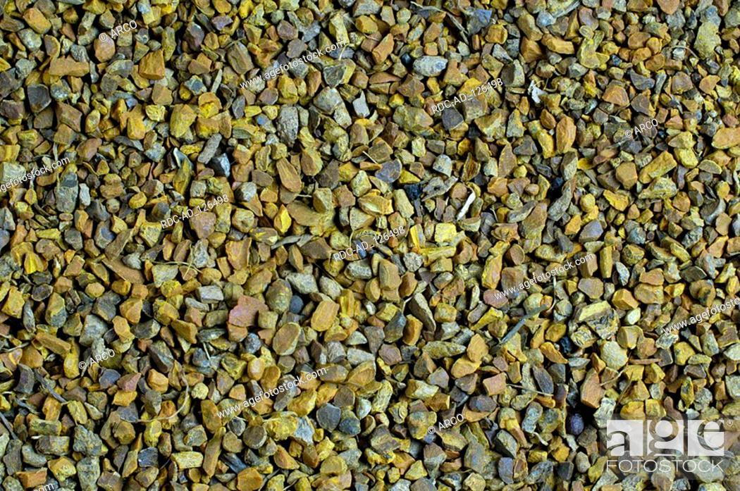 Stock Photo: Zedoary roots Curcuma spec.