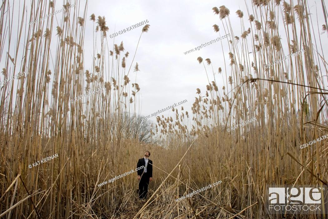 Stock Photo: Man Standing in Tall Grass.