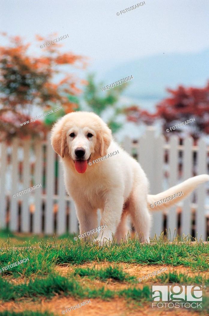 Stock Photo: canine, 35mm, domestic animal, petdog, animal, domestic dog, film.