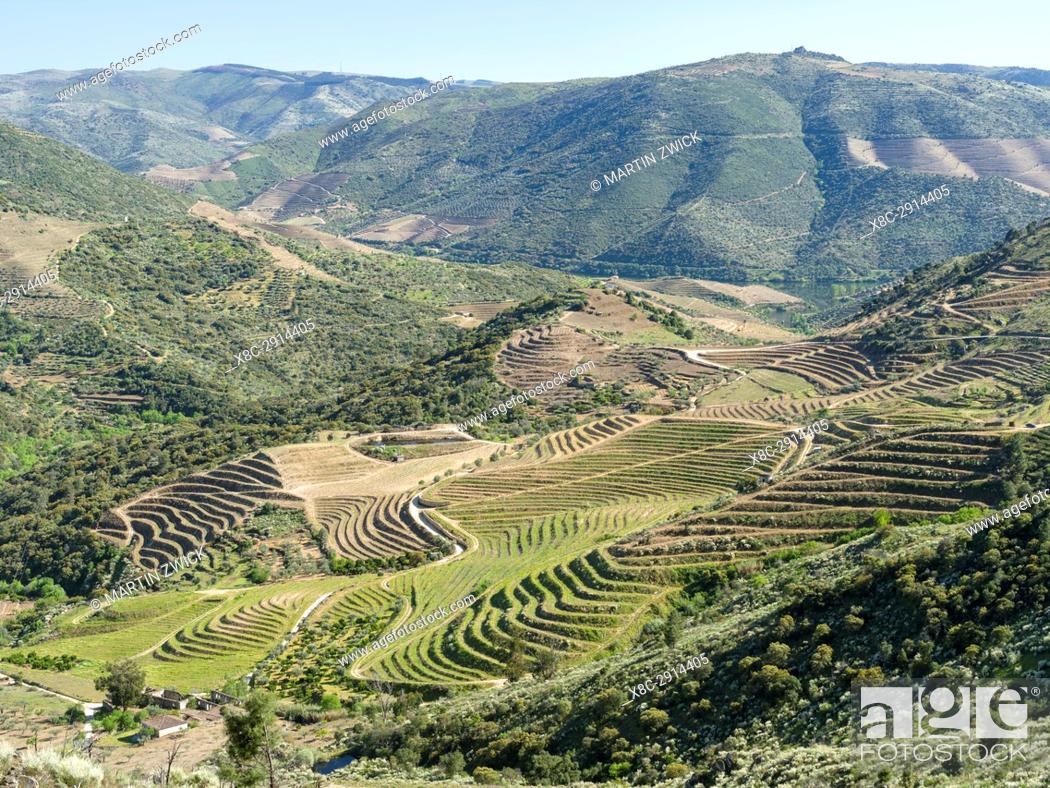 Imagen: Valley of river Douro near village Coleja. The valley of river Douro. It is the wine growing area Alto Douro and listed as UNESCO World heritage.