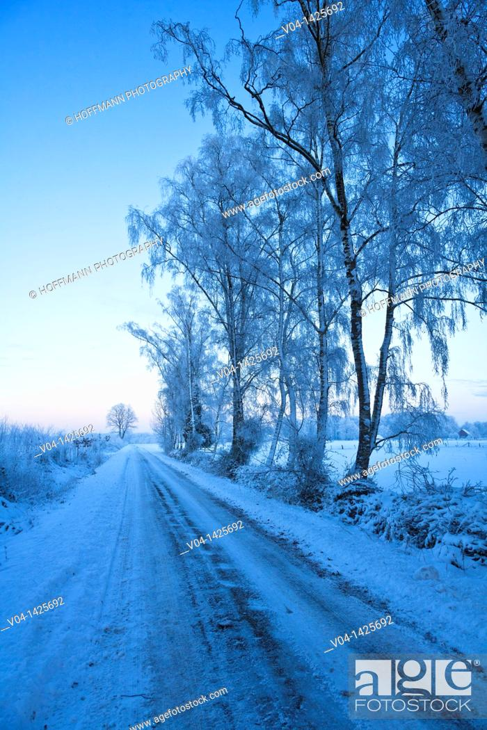 Imagen: Frosted trees and icy road in winter, Lower Saxony, Germany, Europe.