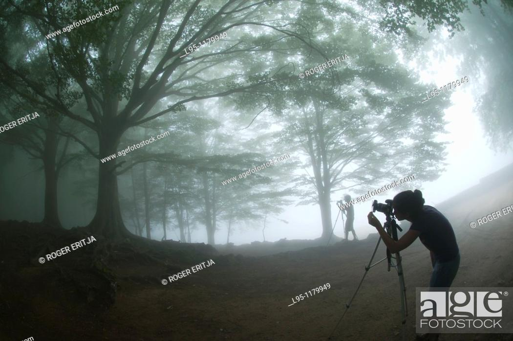 Stock Photo: Photographers in a foggy day taking pictures of beech trees Fagus sylvatica , Montseny nature reserve, Spain  This is the Southernmost Beech forest in Europe.