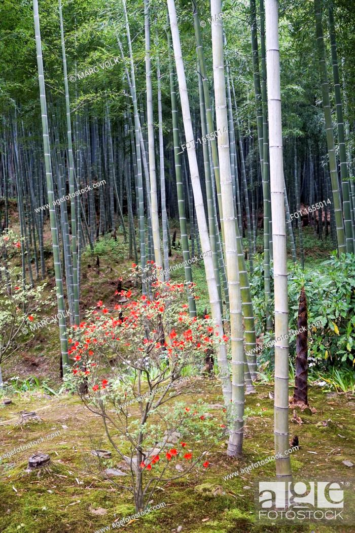 Stock Photo: Flowers and bamboo plants at park, Kyoto, Japan.