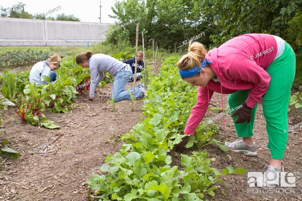 Stock Photo: New Orleans, Louisiana - Volunteers pull weeds in a community garden  The garden was established by Common Ground Relief.