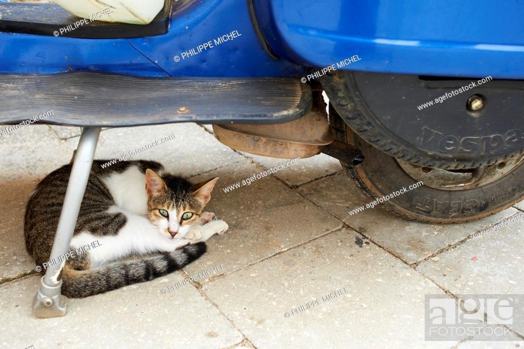 Stock Photo: Tanzania, Zanzibar island, Unguja, Stone Town, street cat.