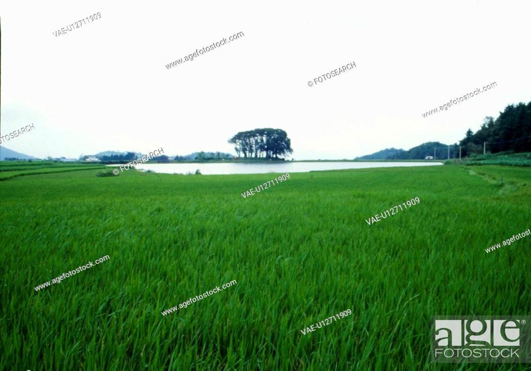 Stock Photo: rural area, natue, reservoir, tree, scene, farmland, landscape.