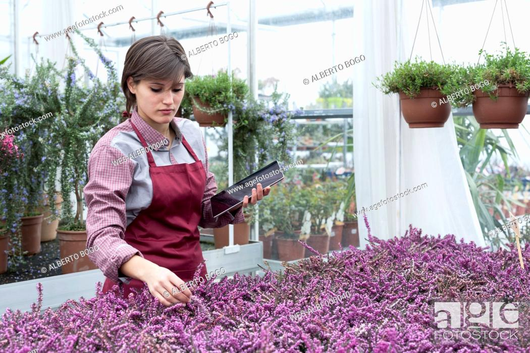 Stock Photo: Young female gardener working in greenhouse with tablet pc.