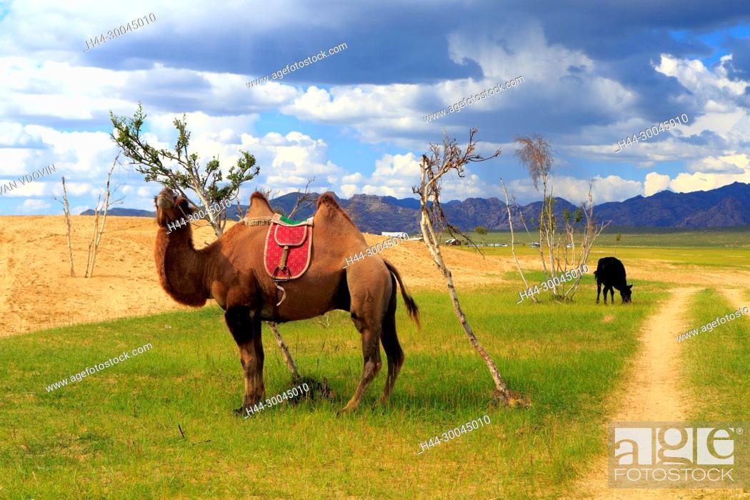 Stock Photo: Mongol Els sand dunes, Tov province, Mongolia.