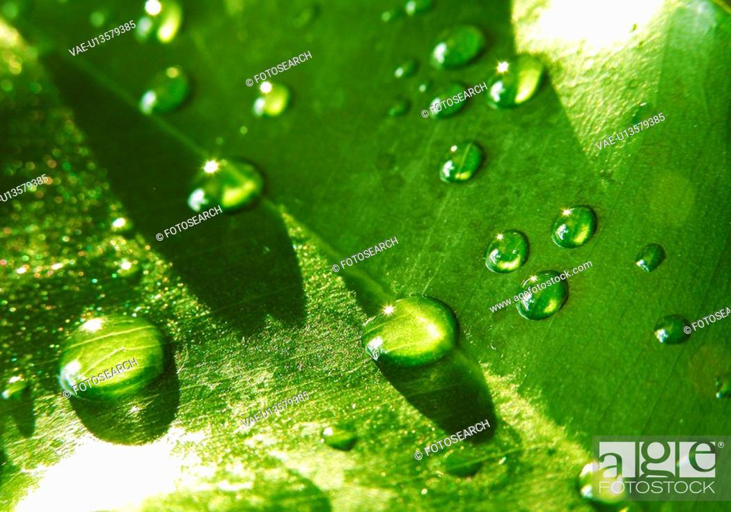 Stock Photo: drop, Austria, drip, close-up, CLOSE, alfred.