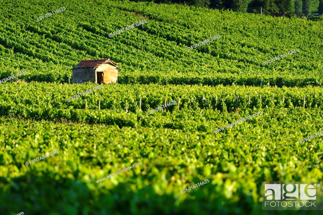 Stock Photo: Hut in vineyards, Burgundy, France.