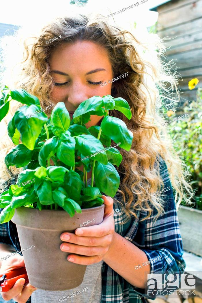 Imagen: Young woman holding fresh basil in pot.