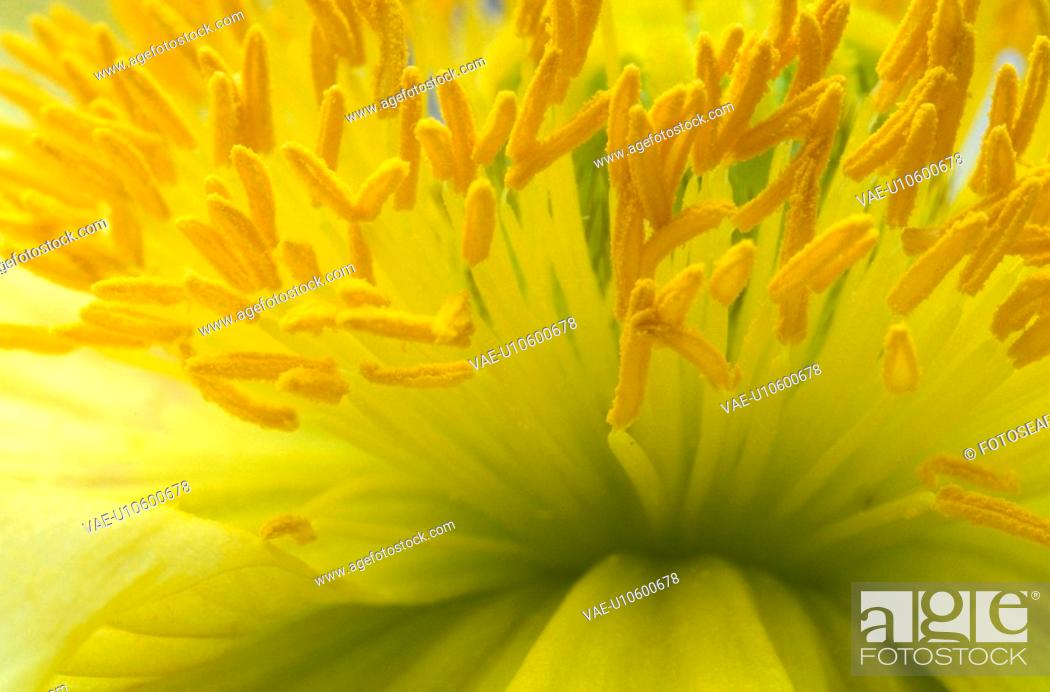 Stock Photo: stempel, abloom, background, Bernhard, bloom, blooms.
